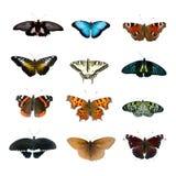 Grande accumulazione delle farfalle Fotografia Stock