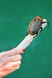 Grande adicional del escarabajo Imagen de archivo libre de regalías