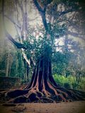 Grande grande, albero Fotografia Stock