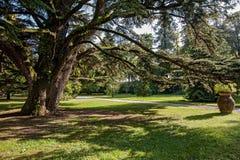 Grande albero Immagini Stock