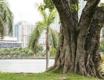 Grande albero al parco 1 Immagini Stock Libere da Diritti