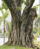 Grande albero al parco 2 Fotografia Stock Libera da Diritti