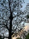 Grande albero alle foreste Fotografia Stock Libera da Diritti