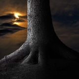 Grande albero in chiaro di luna Fotografie Stock Libere da Diritti