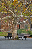 Grande albero con banchi Fotografia Stock
