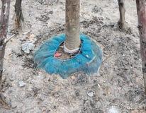 Grande albero con la rete blu Fotografia Stock