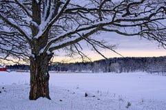 Grande albero con neve a penombra fotografie stock libere da diritti