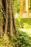 Grande albero coperto di piante Immagini Stock Libere da Diritti