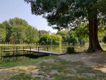 Grande albero dal lato di un lago su una chiara mattina di estate immagine stock