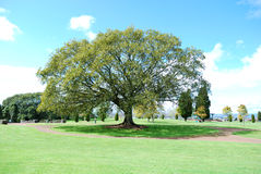 grande albero della sosta immagine stock