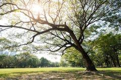 grande albero della sosta Fotografia Stock
