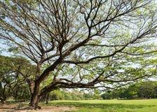 grande albero della sosta Immagine Stock Libera da Diritti