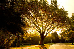 Grande albero di mattina Fotografia Stock
