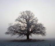 Grande albero di quercia Immagine Stock Libera da Diritti