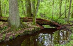 Grande albero due dal fiume a flusso lento Fotografie Stock Libere da Diritti