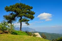 Grande albero e grande montagna Fotografie Stock