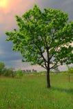 Grande albero e piccola città Fotografia Stock Libera da Diritti