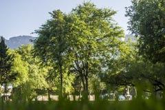 Grande albero frondoso fotografia stock libera da diritti