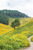Grande albero in mezzo ad un campo dei fiori. Fotografie Stock