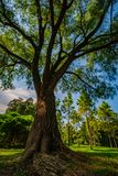 Grande albero nel parco, Shanghai, Cina fotografie stock