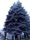 Grande albero nella neve nella città fotografia stock libera da diritti