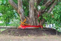 Grande albero santo Fotografia Stock