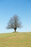Grande albero solo nel campo fotografie stock libere da diritti