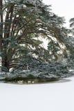 Grande albero sotto la neve con le anatre che nuotano in acqua Immagine Stock Libera da Diritti