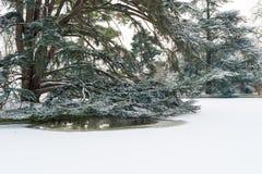 Grande albero sotto la neve con le anatre che nuotano in acqua Immagini Stock