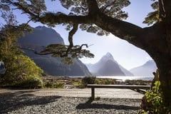 Grande albero sulla banca del lago Immagine Stock