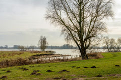 Grande albero sulla banca di ampio fiume Immagini Stock