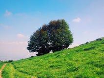Grande albero sulla collina verde Fotografia Stock Libera da Diritti