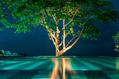 Grande albero sulla piscina Fotografia Stock Libera da Diritti