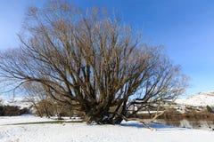 Grande albero sulla riva del lago Immagine Stock Libera da Diritti