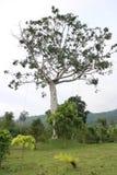 Grande albero sulla terra fotografie stock libere da diritti
