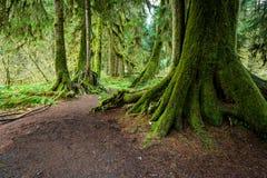 Grande albero verde Immagini Stock
