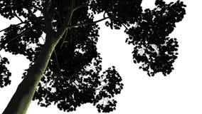 Grande albero verde isolato su fondo bianco Fotografie Stock Libere da Diritti