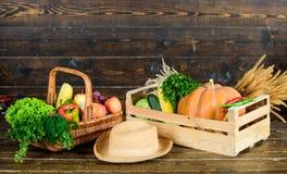 Grande alimento para o estilo de vida saud?vel Produto saud?vel Festival da colheita Cesta com frutas e legumes colheita rica do  foto de stock