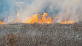 Grande alto incendio violento terribile nella steppa della foresta L'erba asciutta della steppa sta bruciando in autunno profondo archivi video
