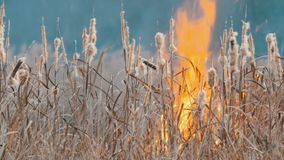 Grande alto incendio violento terribile nella steppa della foresta L'erba asciutta della steppa sta bruciando in autunno profondo stock footage
