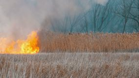 Grande alto incendio violento terribile nella steppa della foresta L'erba asciutta della steppa sta bruciando in autunno profondo video d archivio