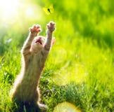Grande amore di arte il piccolo gattino sveglio Fotografie Stock