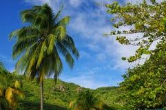 Grande Anse δ ` Arlet - Μαρτινίκα - νησί Καραϊβικής Στοκ Εικόνες