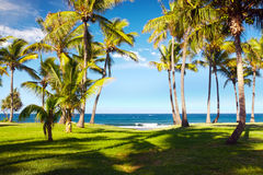 Grande Anse beach. Scenic view of palm trees on Grande Anse beach with sea in background, Reunion Island Stock Photos