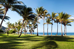 Grande Anse beach Royalty Free Stock Image