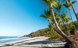 Grande Anse beach, Reunion Island. Scenic view of palm trees on Grande Anse beach, Reunion Island stock image