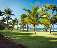 Grande Anse beach, Reunion Island. Scenic view of palm trees on Grande Anse beach with sea in background, Reunion Island Stock Photos