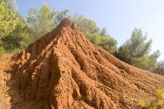 Grande anthill Fotografie Stock
