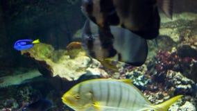 Grande aquário com diferentes tipos de peixes vídeos de arquivo