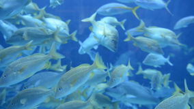 Grande aquário do aquário filme